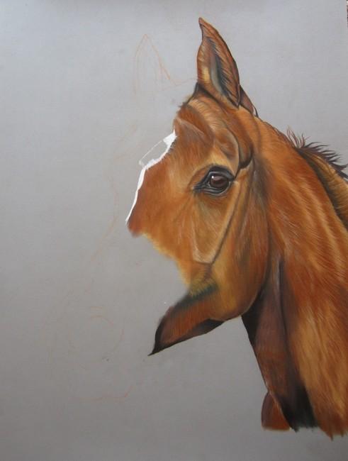 cheval arabe pastels