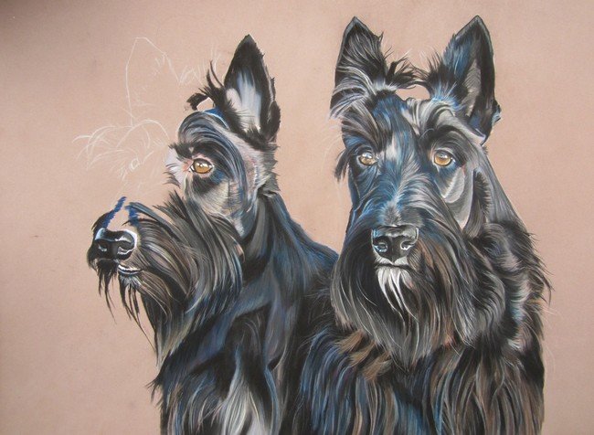 Scottish terrier pastel sec