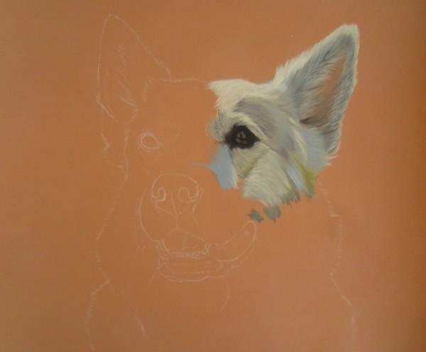 chien blanc pastel