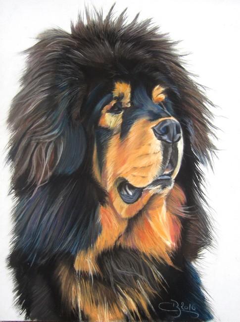 dessin dogue du tibet