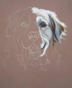 dessiner chien golden