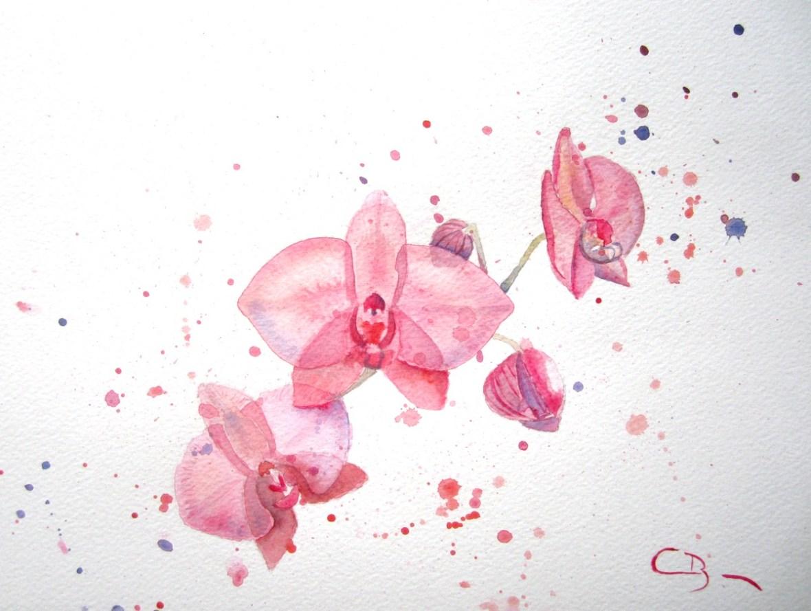 aquarelle orchidées
