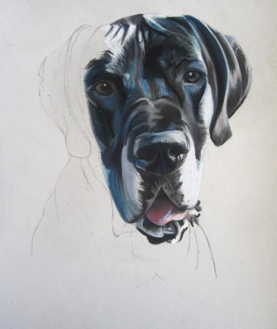 dessiner dogue