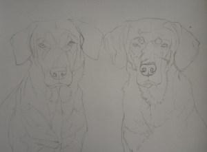 esquisse chiens
