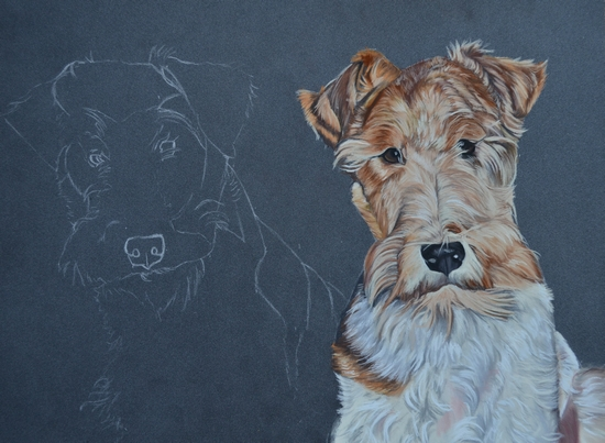 portrait fox terrier