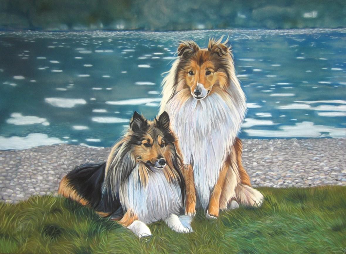 tableau bergers des shetlands