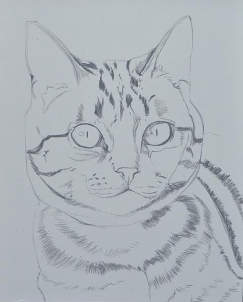 Chat tigr aux pastels - Chat en dessin ...