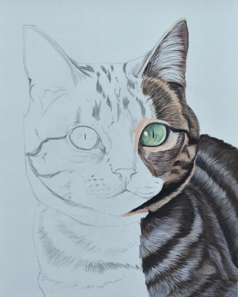 dessiner-chat-pastel