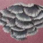gris-du-gabon-8