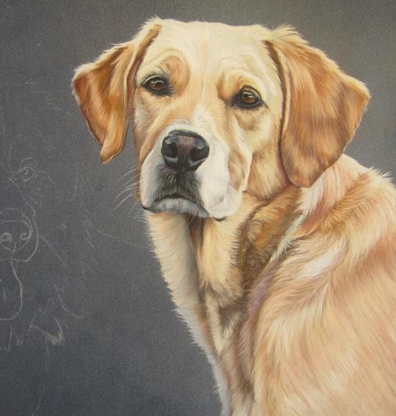 peindre-labrador