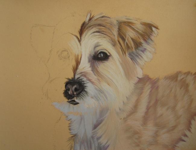 chien-beige-pastel
