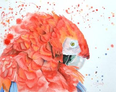 perroquet aquarelle