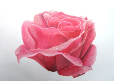 rose promarker