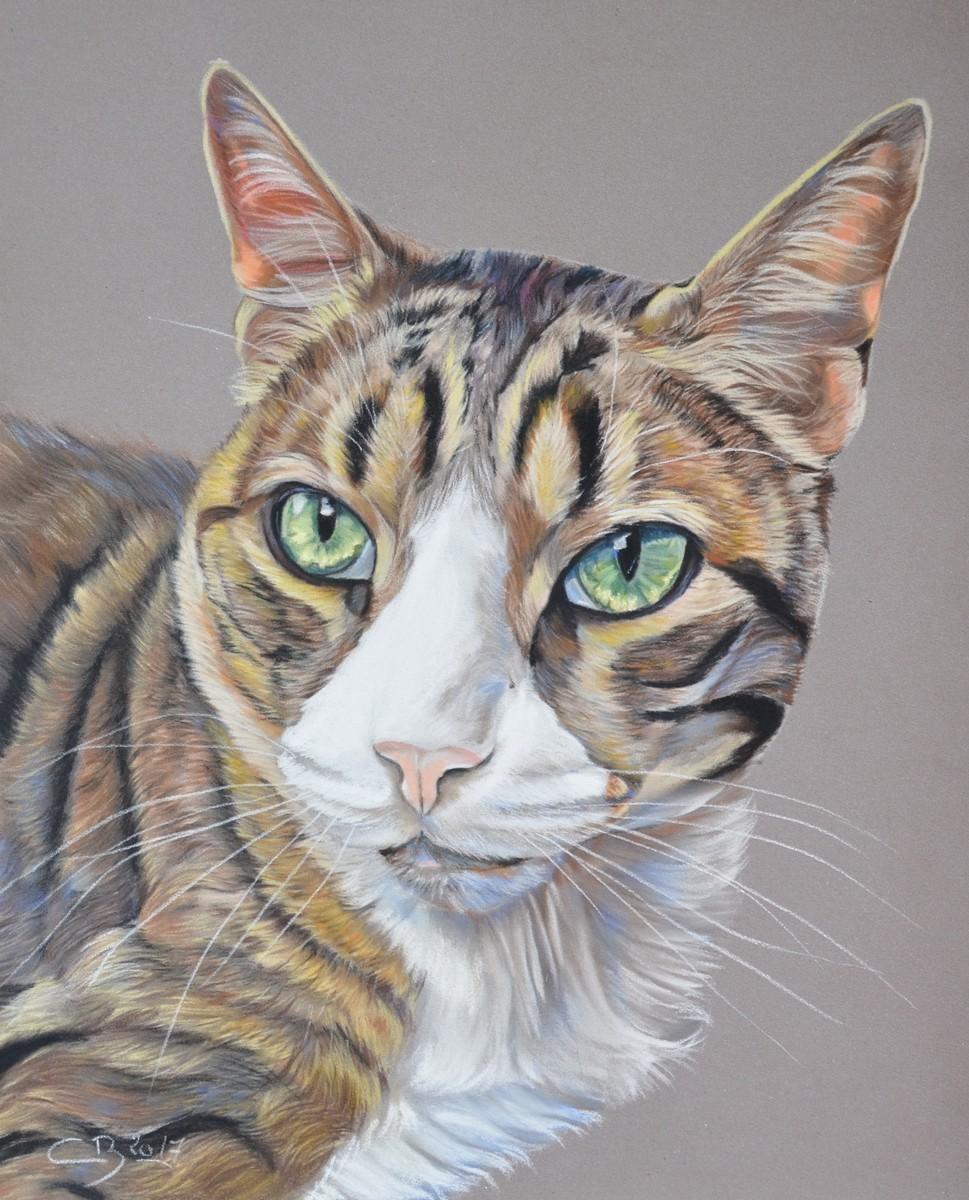 Portrait de chat au pastel sec - Peinture au pastel sec ...