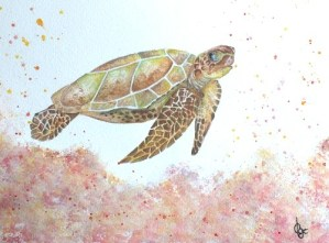 tortue-cathia