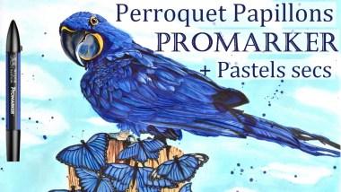 perroquet promarker