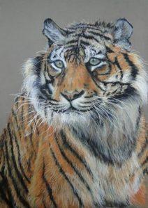 tigresse-christian