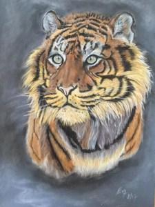 tigresse-evelyne