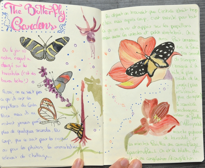 croquis papillons