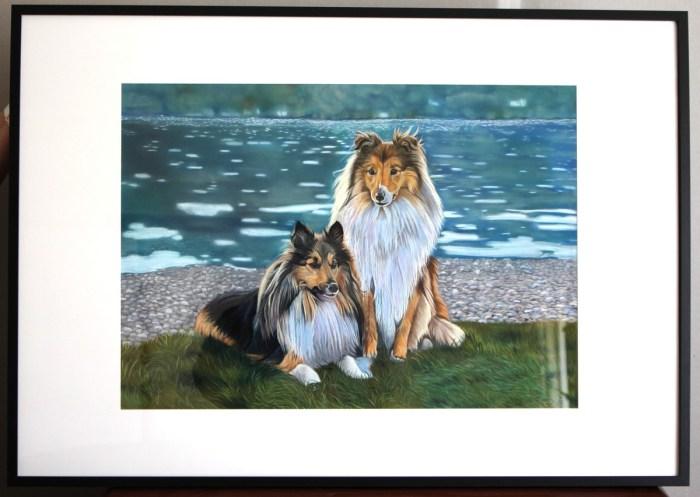 berger shetlands pastel