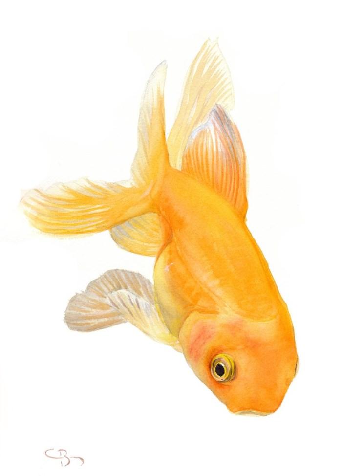 poisson rouge aquarelle