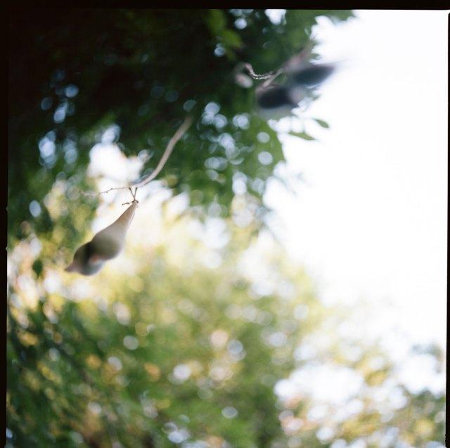 Hanging seeds