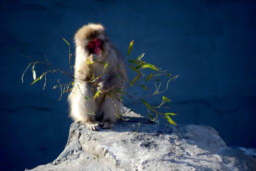 Monkey at Ueno Zoo