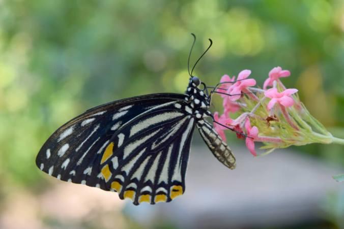 Butterfly Garden Cambodia