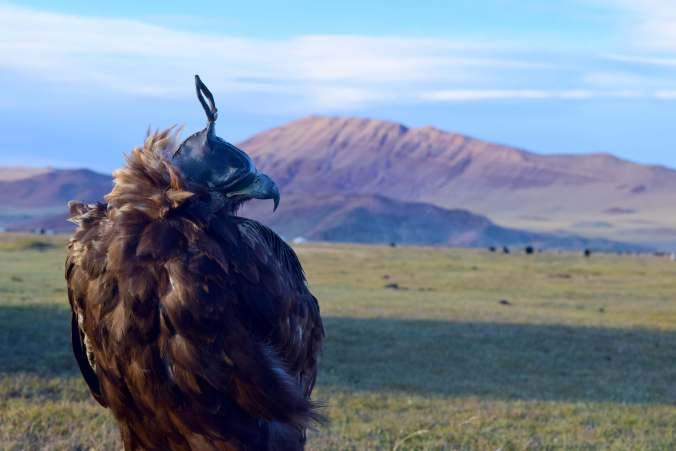 Mongolia_Eagle_Hunting