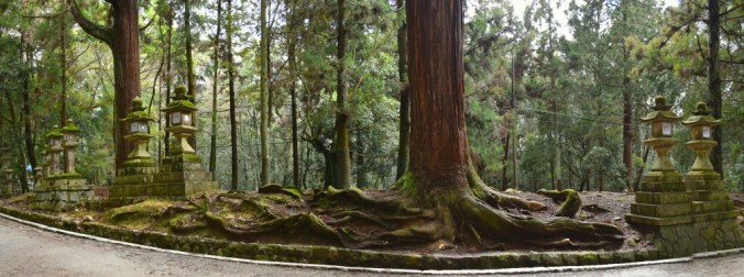 In the forest of Kasuga Taisha Shrine.