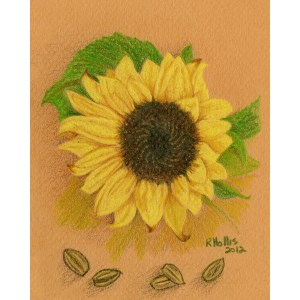 Sunflower 5″x 7″