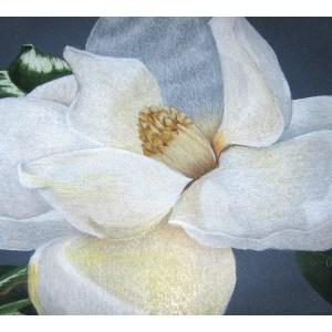 Magnolia 8″x 10″