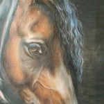 Susan Rathbone Arabian Horse Oil Painting Artists Illustrators Original Art For Sale Direct From The Artist
