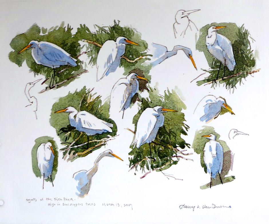 Barry Van Dusen - Egret sketches