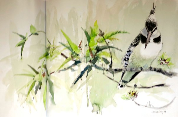 David Daly - Pied Kingfisher