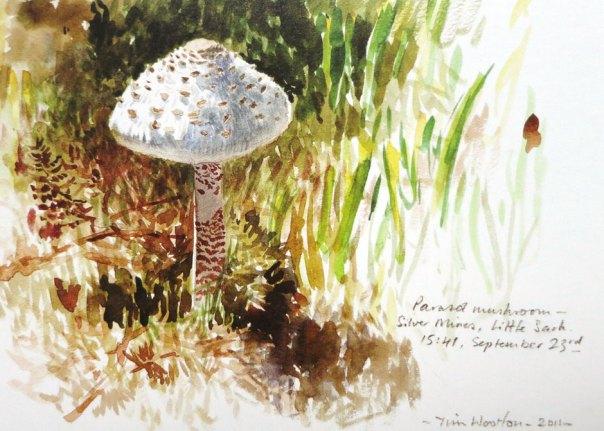 Tim Wootton - Parasol Mushroom