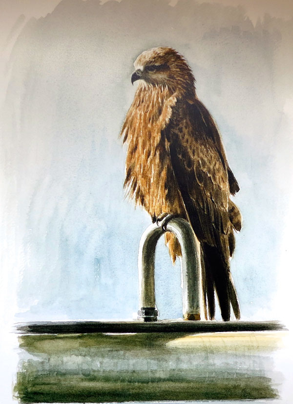 Paschalis Dougalis - Black Kite