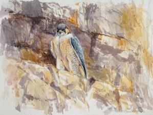 Juan Varela Simó, Barbary falcon, Jordan