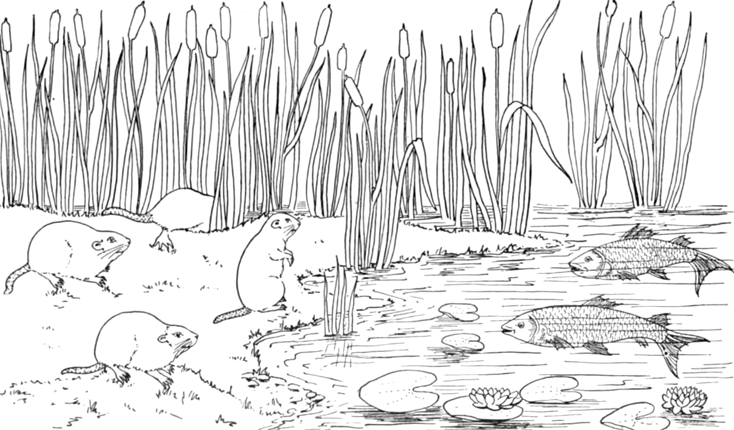 muskrats and fish in the reeds on the shore coloring pages fish