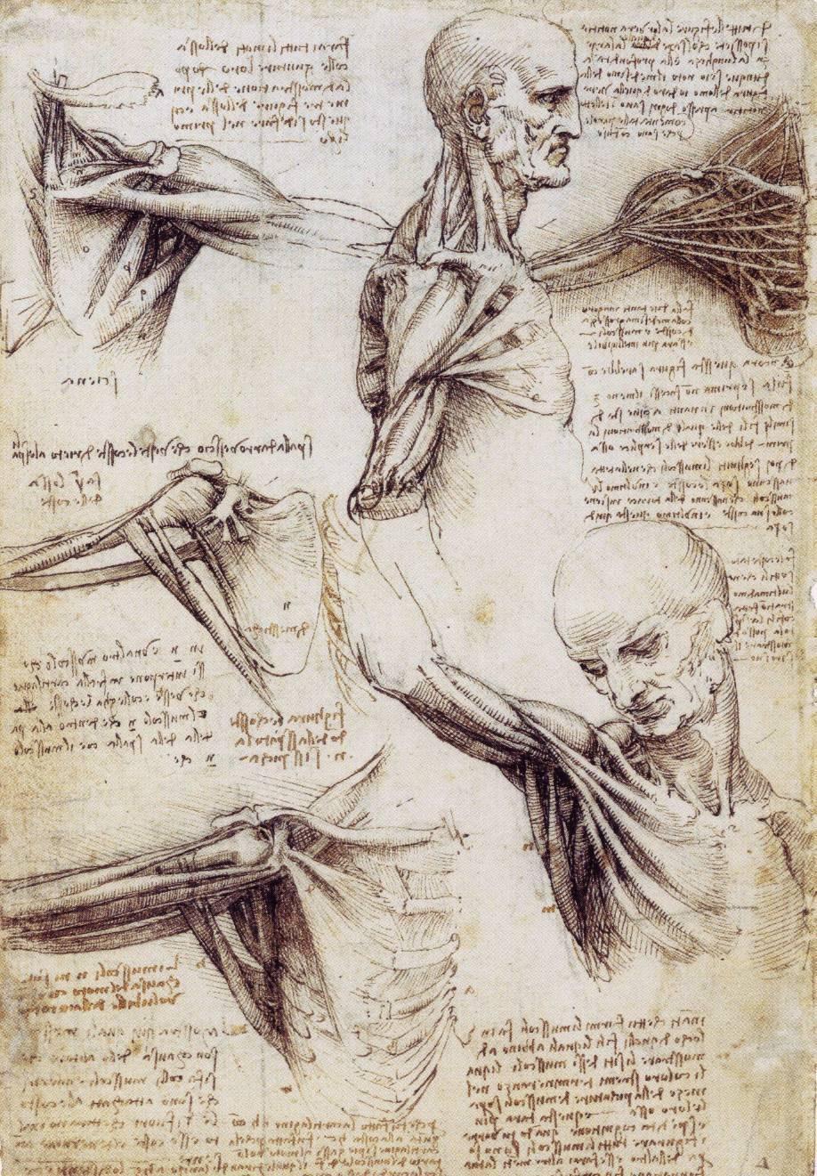 Drawing by da Vinci