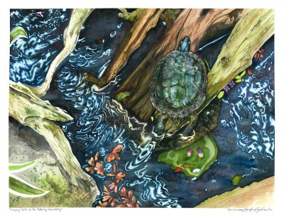 turtle sitting on driftwood watercolor painting