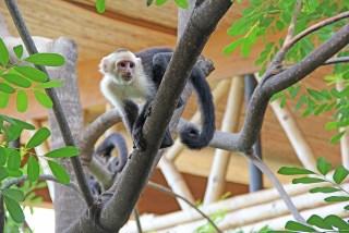 monkeybreakfast