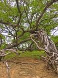 rootsy