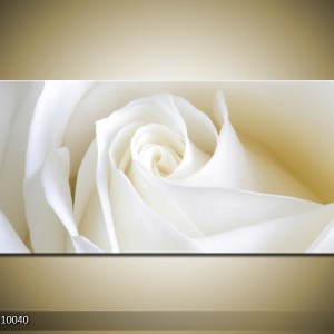 bloemen canvas 471 – witte close-up roos