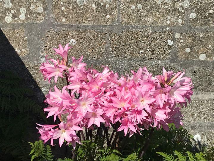 petit massif de fleurs photography by