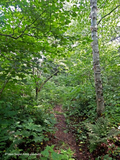Sentier 2