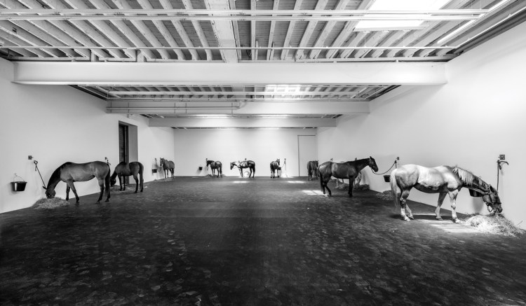 In 2015, Brown fulfilled his longtime dream of re-creating Jannis Kounellis's Untitled (12 horses) from 1969.