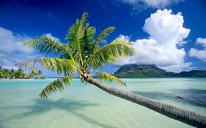 Bora Bora Lone Palm,The Most Beautiful Island in the World, Beach, Island, Tahiti, ArtofAdventure.Net