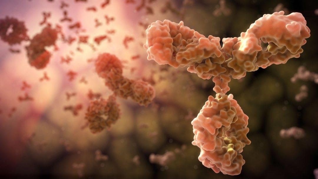 John Liebler - Antibodies IgG1