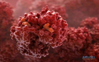 Hemoglobin - 005